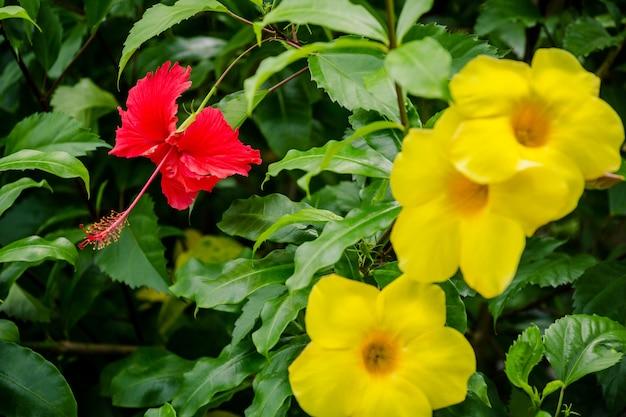 Gele bloem op boom