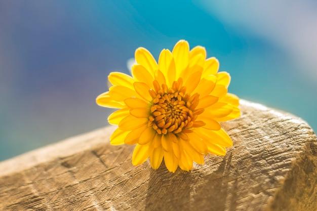 Gele bloem op een blauwe achtergrond