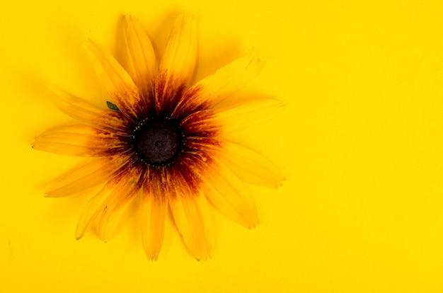 Gele bloem op heldere document achtergrond