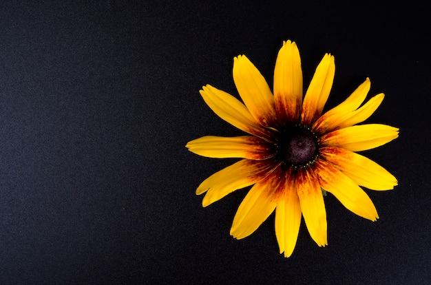 Gele bloem op heldere papierachtergrond gelukkig nieuw jaar 2020 jaar van de rat