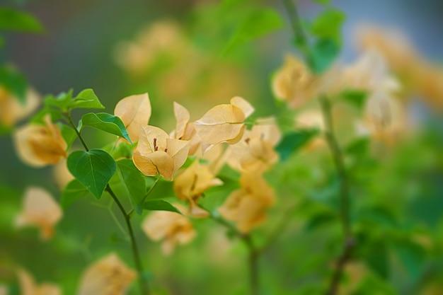Gele bloem op onduidelijk beeldachtergrond