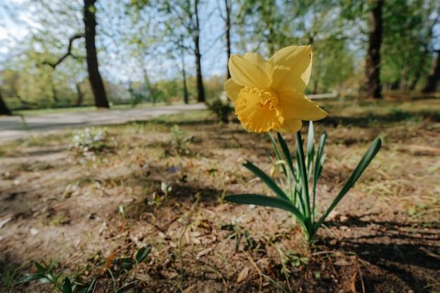 Gele bloem van groot tot een kom gevormd in het park