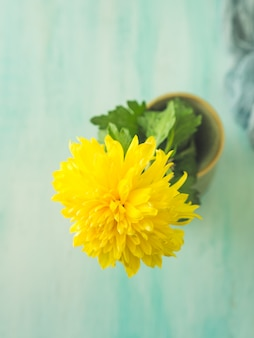 Gele bloem.