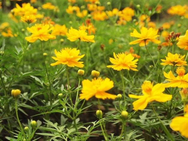 Gele bloemen achtergrond