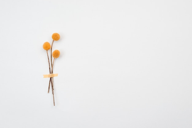 Gele bloemen die op gele achtergrond worden geïsoleerd