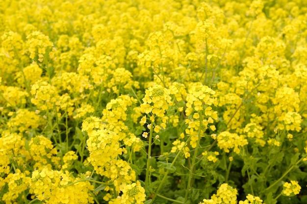 Gele bloemen groeien overdag naast elkaar