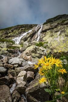 Gele bloemen groeien uit de grond voor een waterval in tatra-gebergte, slowakije