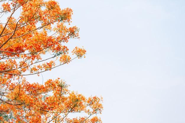 Gele bloemen in de lucht.