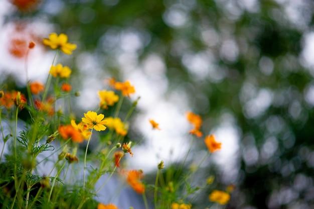 Gele bloemen in een mooie bloementuin, close-up met bokeh