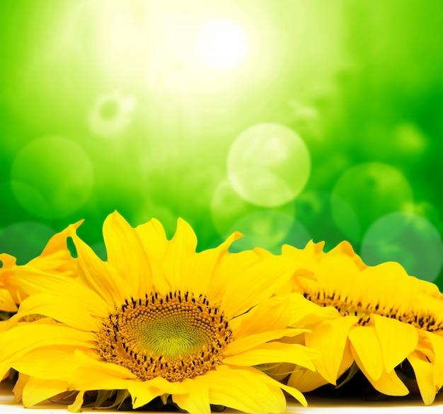Gele bloemen met bokeh-effect