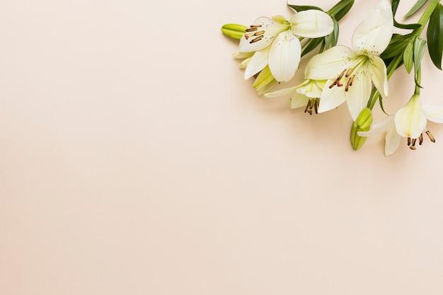 Gele bloemen op beige achtergrond