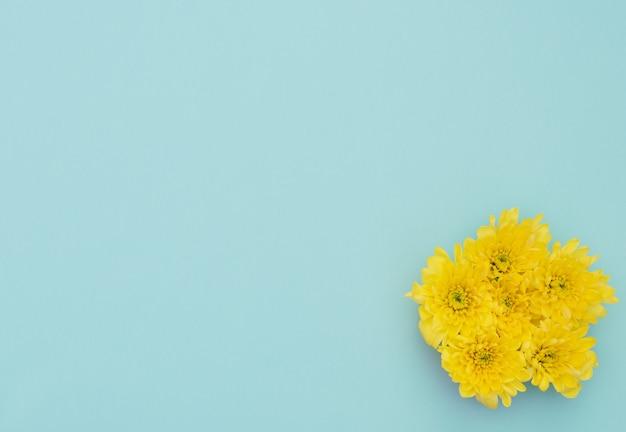 Gele bloemen op blauwe achtergrond. moederdag, lente concept.