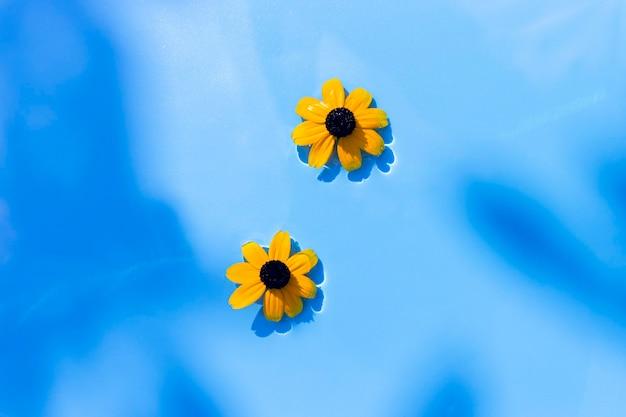 Gele bloemen op een blauwe waterachtergrond onder natuurlijk licht. bovenaanzicht, plat gelegd.