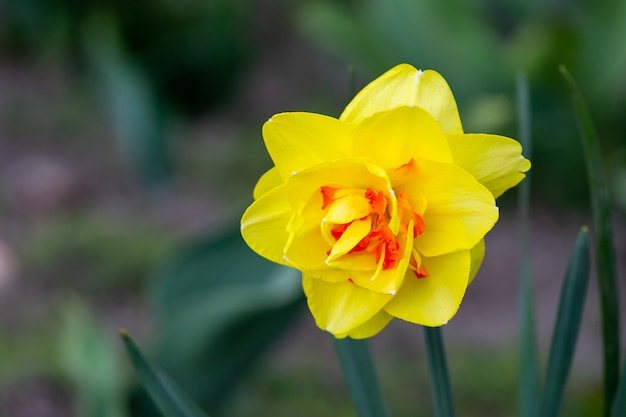 Gele bloemen op groen