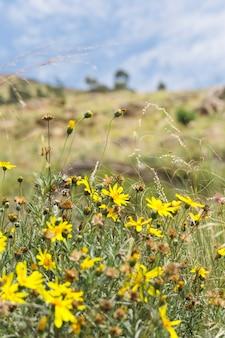 Gele bloemen op weide
