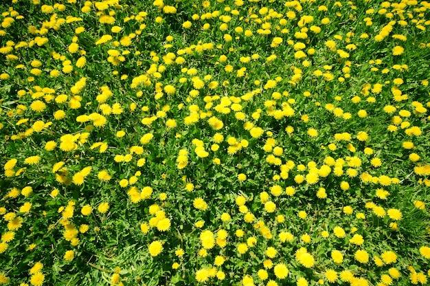 Gele bloemen van bovenaf te bekijken