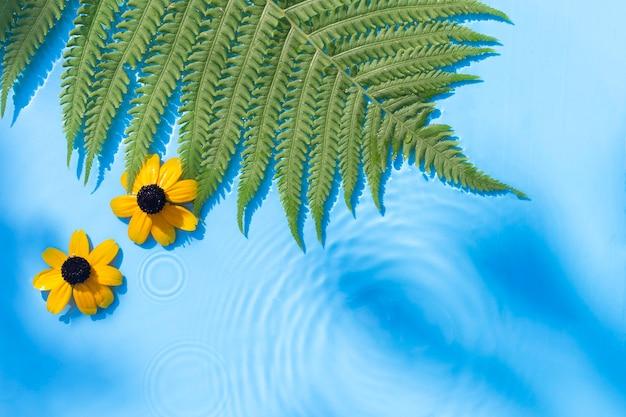 Gele bloemen, varenblad op een blauwe waterachtergrond onder natuurlijk licht. bovenaanzicht, plat gelegd.