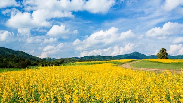 Gele bloemvelden tegen blauwe hemel
