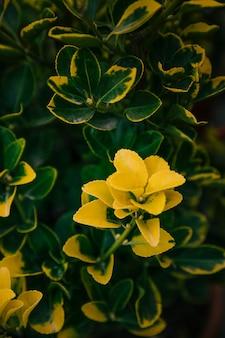 Gele botanische bladeren in de tuin