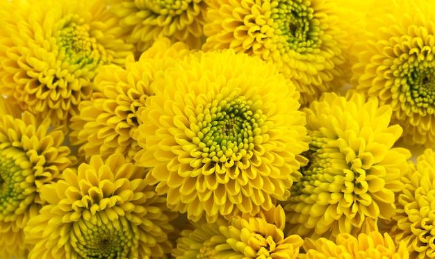 Gele chrysanthemum flowers bouquet closeup