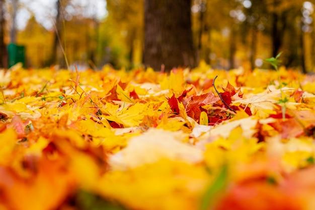 Gele de herfstbladeren ter plaatse.