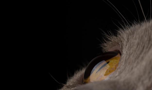 Gele dichte omhooggaand van het kattenoog op zwarte achtergrond