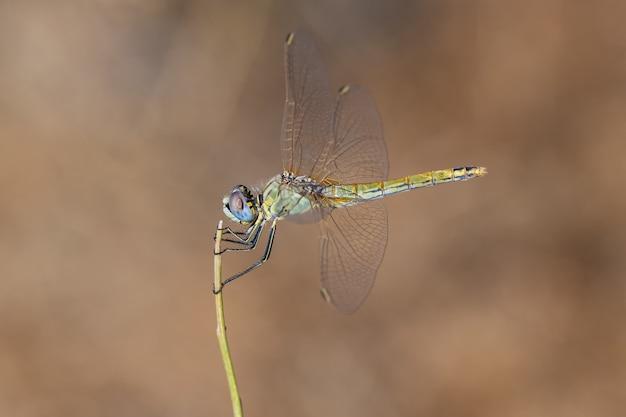 Gele dragonfly op een onscherpe achtergrond