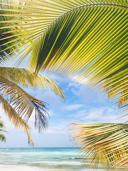 Gele en groene bladeren van palm op gouden strand