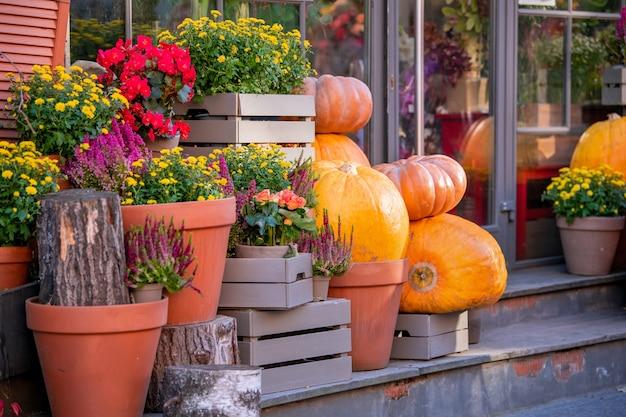 Gele en oranje pompoenen in de tuin of op de beurs. herfst oogsttijd. natuurlijke achtergrond