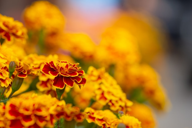 Gele en rode bloemen