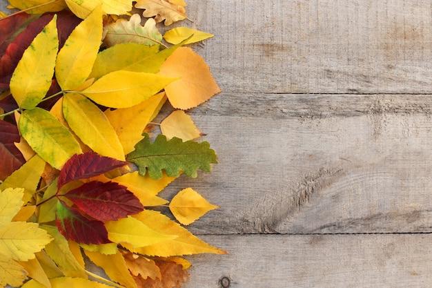 Gele en rode herfstbladeren