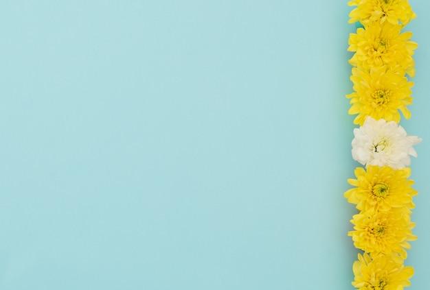 Gele en witte bloemen op blauwe achtergrond.