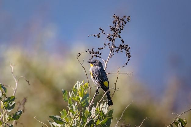 Gele en zwarte vogel op boomtak overdag