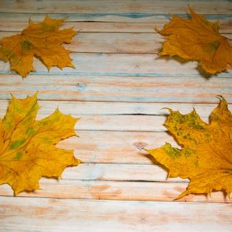 Gele esdoorn op een houten tafel, herfst