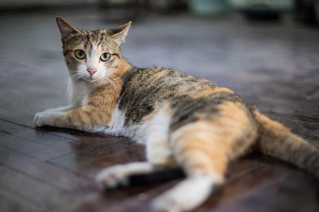 Gele gestreepte kat die op het bed ligt
