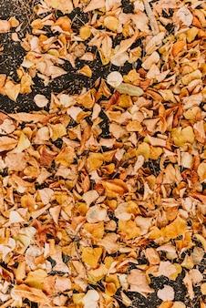Gele gevallen bladeren op de zwarte grond