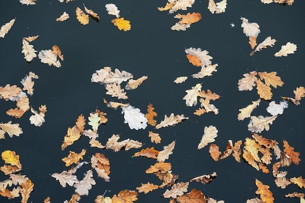 Gele gevallen eikenbladeren op het oppervlak van het meer