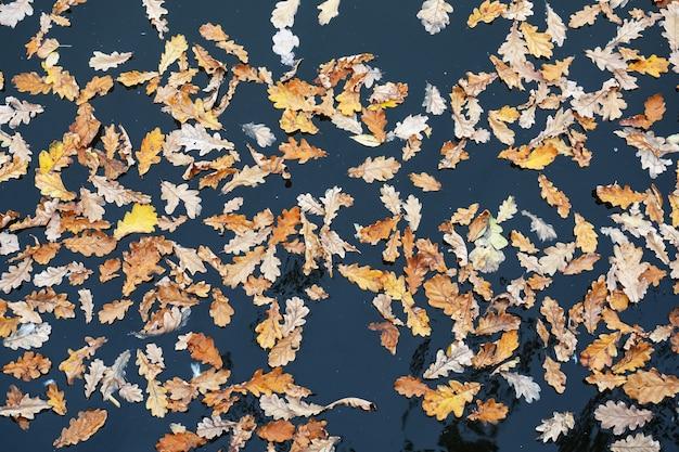 Gele gevallen eikenbladeren op het oppervlak van het meerwater.