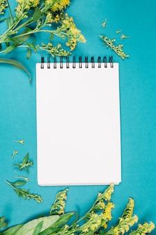 Gele guldenroede of solidago gigantea bloeit dichtbij de lege witte spiraalvormige blocnote op blauwe achtergrond