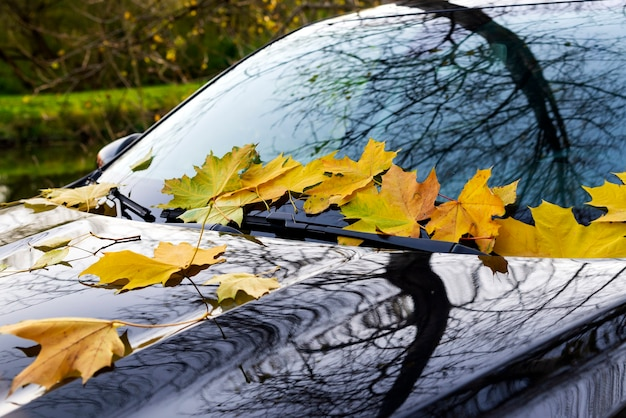 Gele herfst esdoornbladeren liggen op de voorruit van een zwarte auto in een prachtig park.
