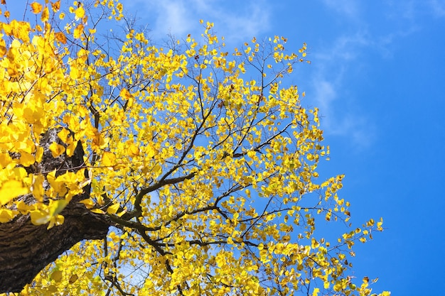 Gele herfstbladeren op de achtergrond van de blauwe hemel
