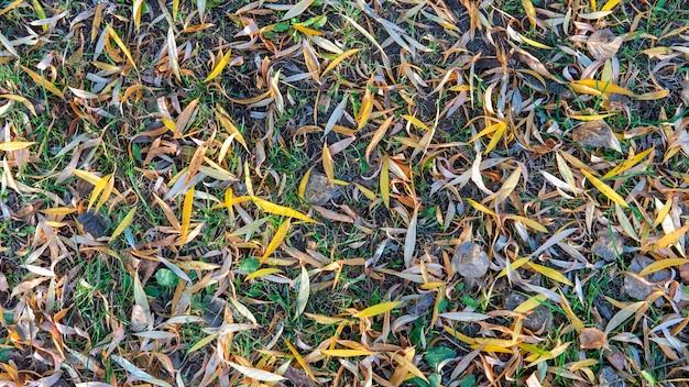 Gele herfstbladeren op de grond.