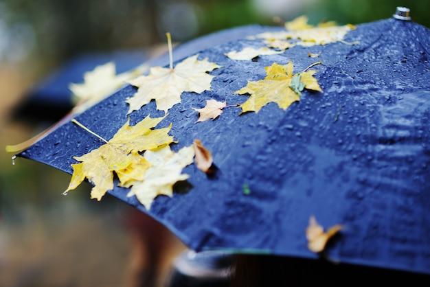 Gele herfstbladeren op een zwarte paraplu