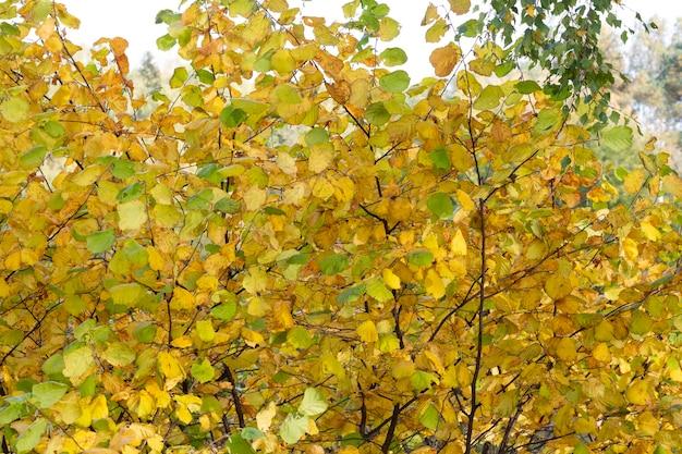 Gele herfstkleuren in een botanische tuin.