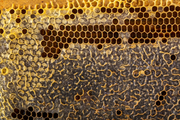 Gele honingraattextuur