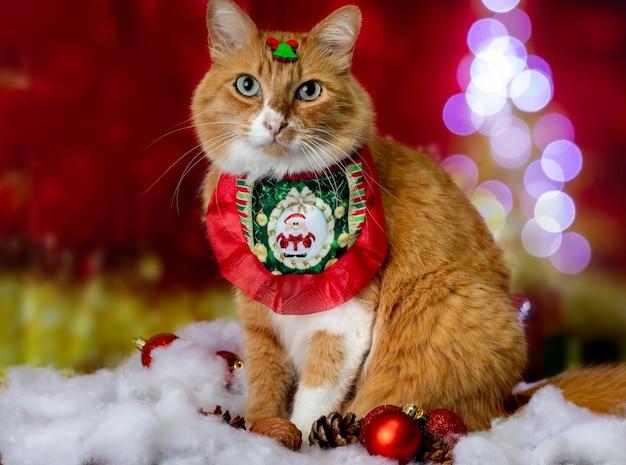 Gele kat in kerstsetting met kledingaccessoires, verlichting en ornamenten.