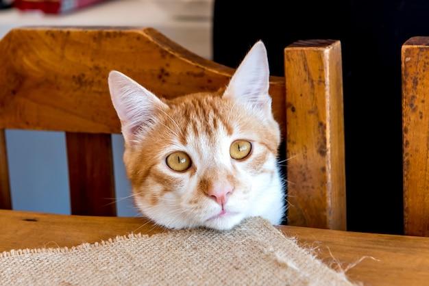 Gele kat kijkt naar camera met gezicht op tafel gele ogen