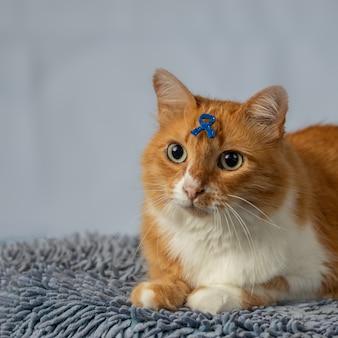 Gele kat met symbool op voorhoofd verwijzend naar blauwe novembercampagne.