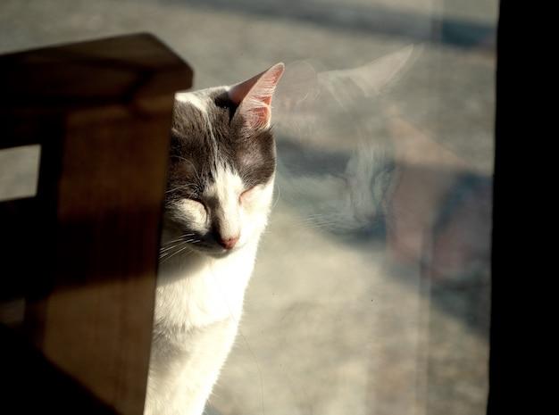 Gele kat slaapt voor een raam en ziet haar spiegelbeeld in het raam