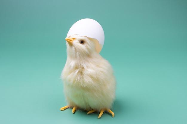 Gele kip met een schelp op zijn kop